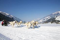 Hundeschlitten in Adelboden-Lenk-Frutigen