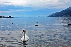 Bielersee - einer der Schweizer Seen