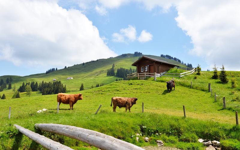 Appenzell - Landschaft und Kühe