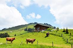 Appenzell - eine der beliebten Urlaubsregionen der Schweiz