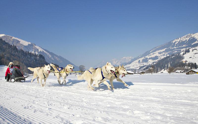 Schlittenhunderennen in Adelboden-Lenk-Frutigen